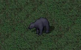 https://www.arcanum.gen.tr/img/rare-bear.jpg